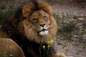 Comment séduire un partenaire du signe du Lion